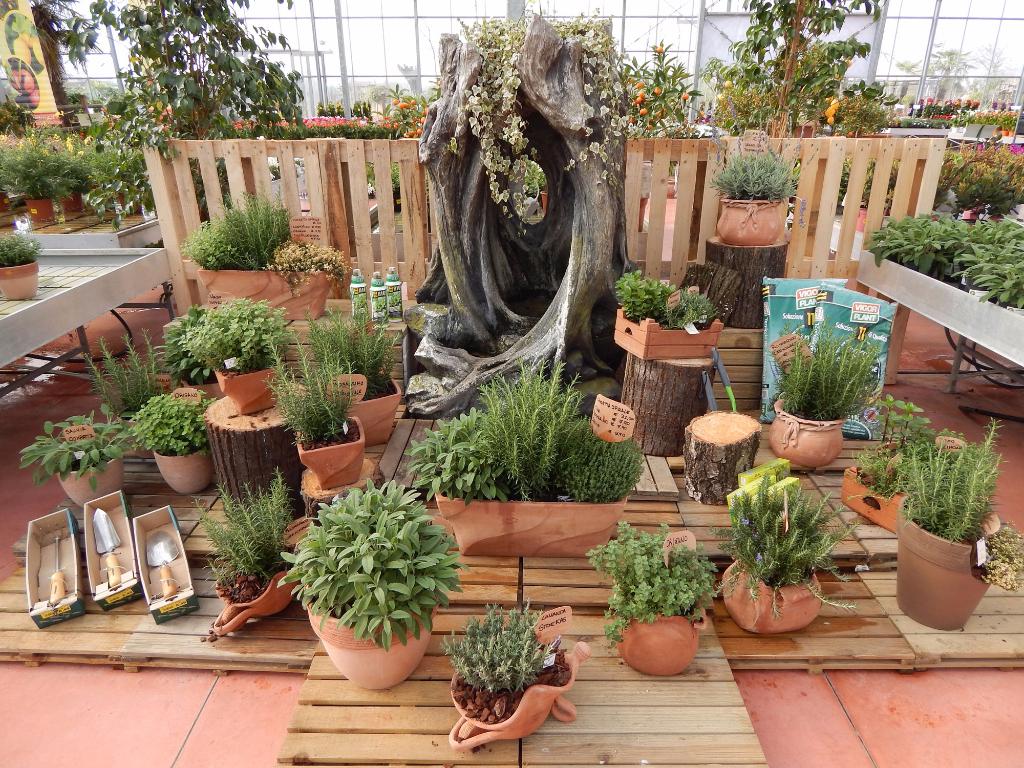 Fiori e piante zocca garden for Piante fiori