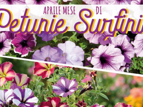 aprile petunie surfinie
