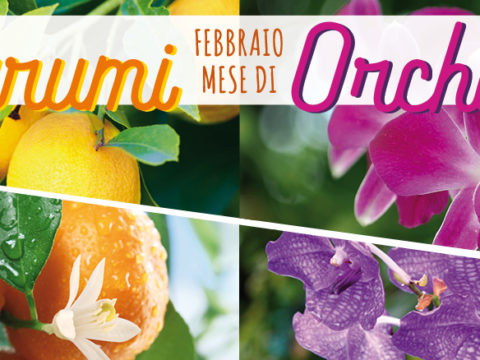febbraio agrumi orchidee