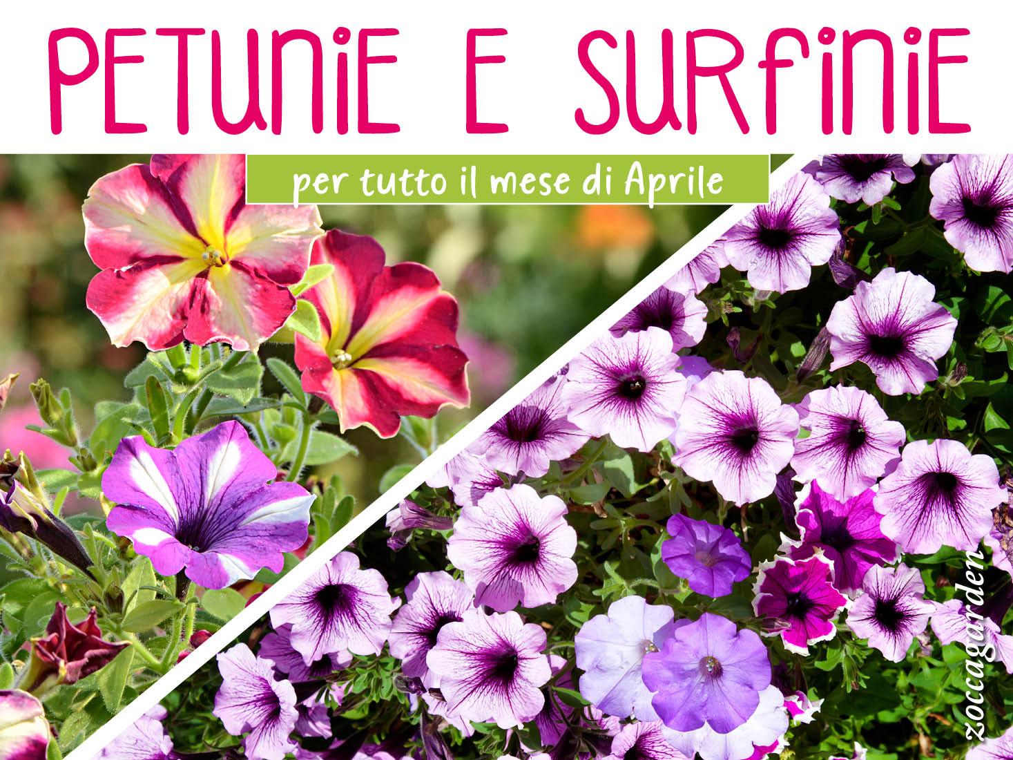 Aprile Petunie e Surfinie