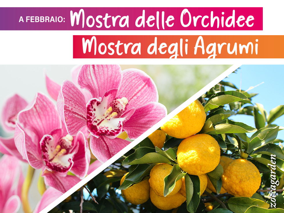 Mostra delle Orchidee e degli Agrumi