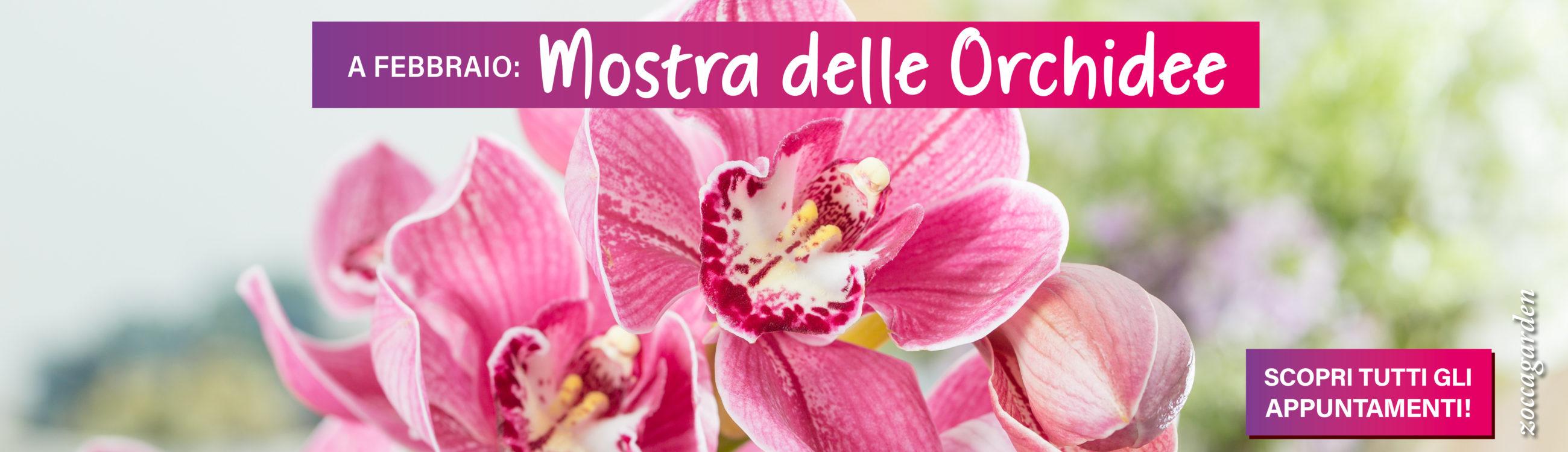 Slider Mostra delle Orchidee